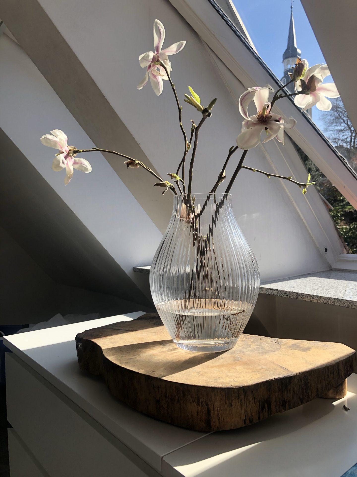 Blühende Magnolienzweige in der Frülingssonne